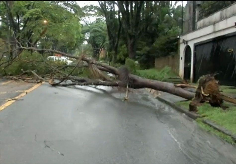 Chuva derruba árvores e transborda córrego em SP