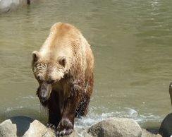 Urso é morto a tiros após escapar de jaula em zoológico na Alemanha