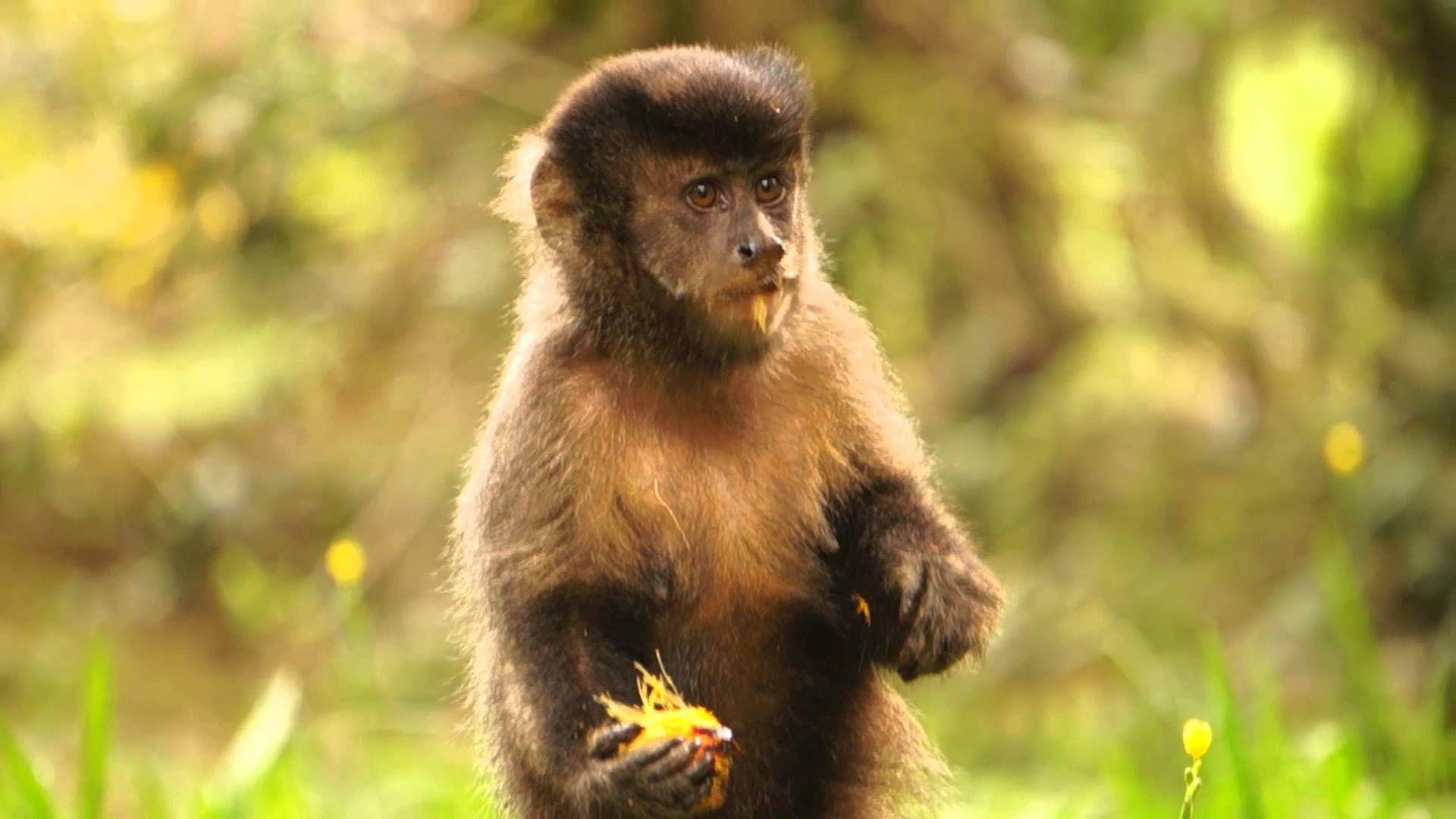 SES afirmou que não há casos, até o momento, da doença em macacos ou humanos no município. / Agência Brasil