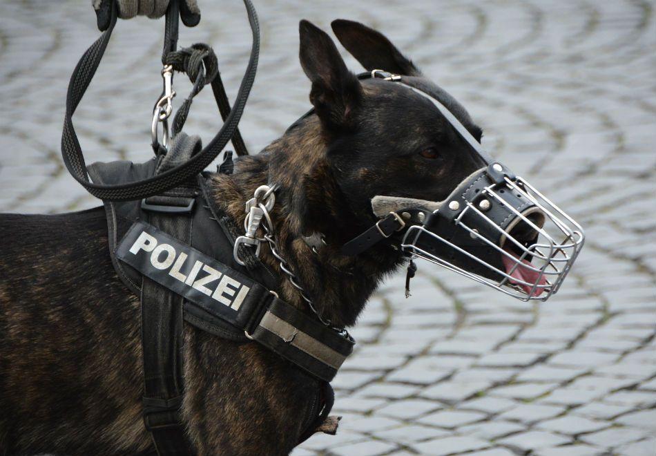 Entenda como os cães detectam explosivos no metrô