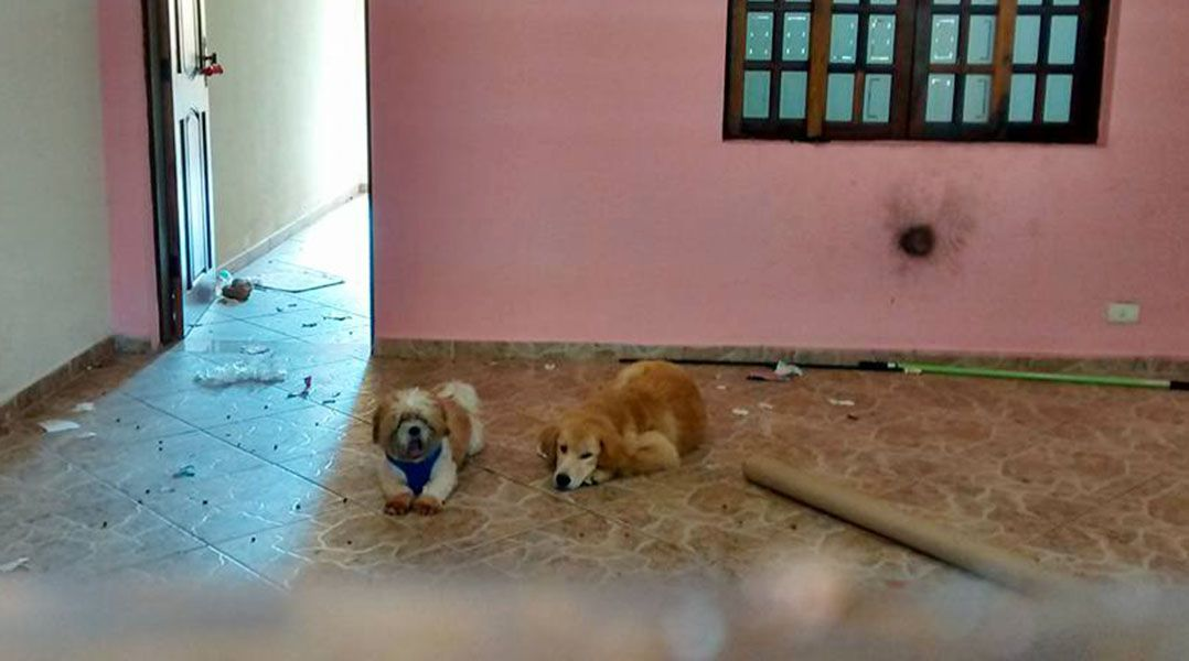 Família se mudou e deixou os animais para trás e sem comida na Vila Liviero, em São Paulo / Reprodução/Facebook