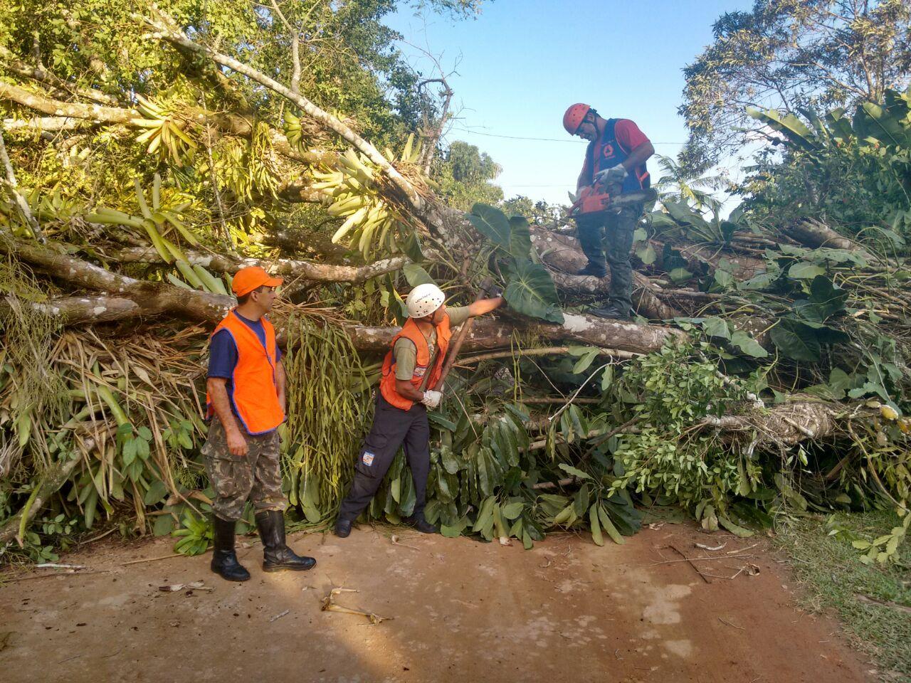 Defesa Civil em ação na remoção de árvores. / Secretaria de Comunicação Social / PMU