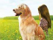 A vida de todos vai mudar com a chegada deste cãozinho / Divulgação