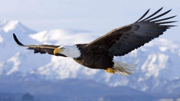 A Águia Careca é destaque na atração / Divulgação