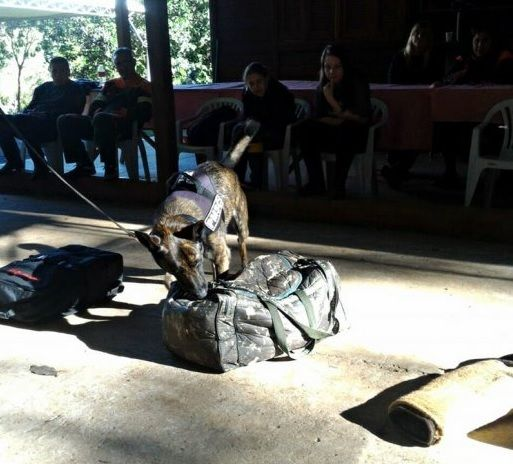 Cão da PM de Santa Catarina recebe certificação inédita