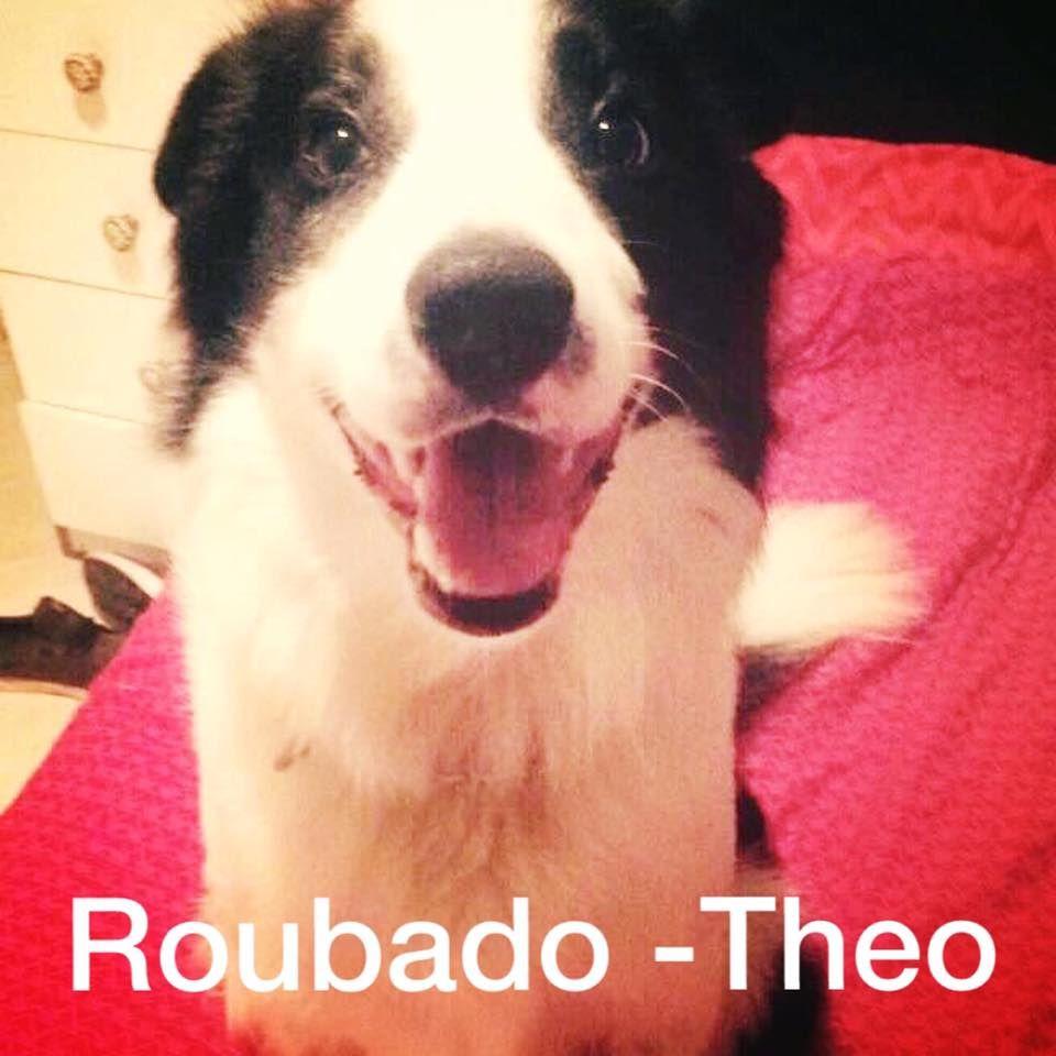 Cães de estimação são alvo de ladrões