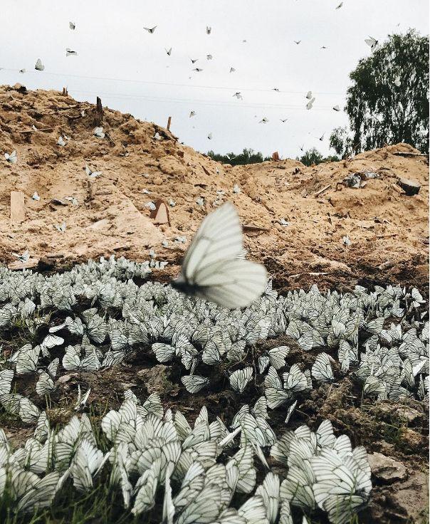 Rússia: Milhares de borboletas invadem regiões siberianas