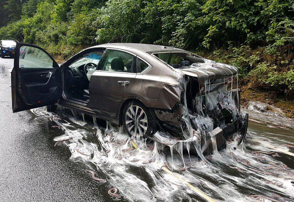 Acidente com enguias deixa estrada e carros pegajosos