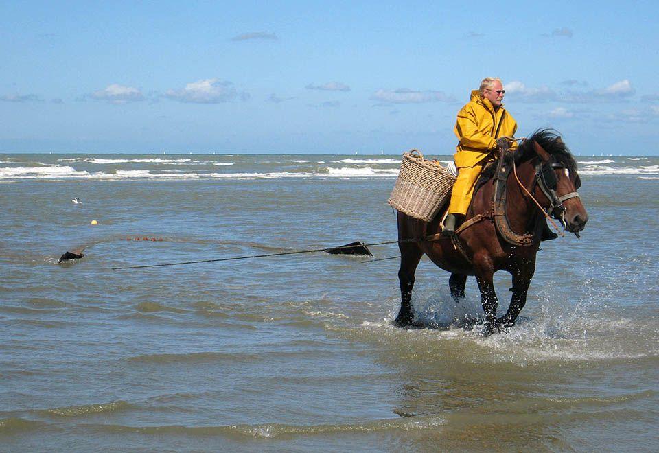 Pesca a cavalos atrai turistas na Bélgica