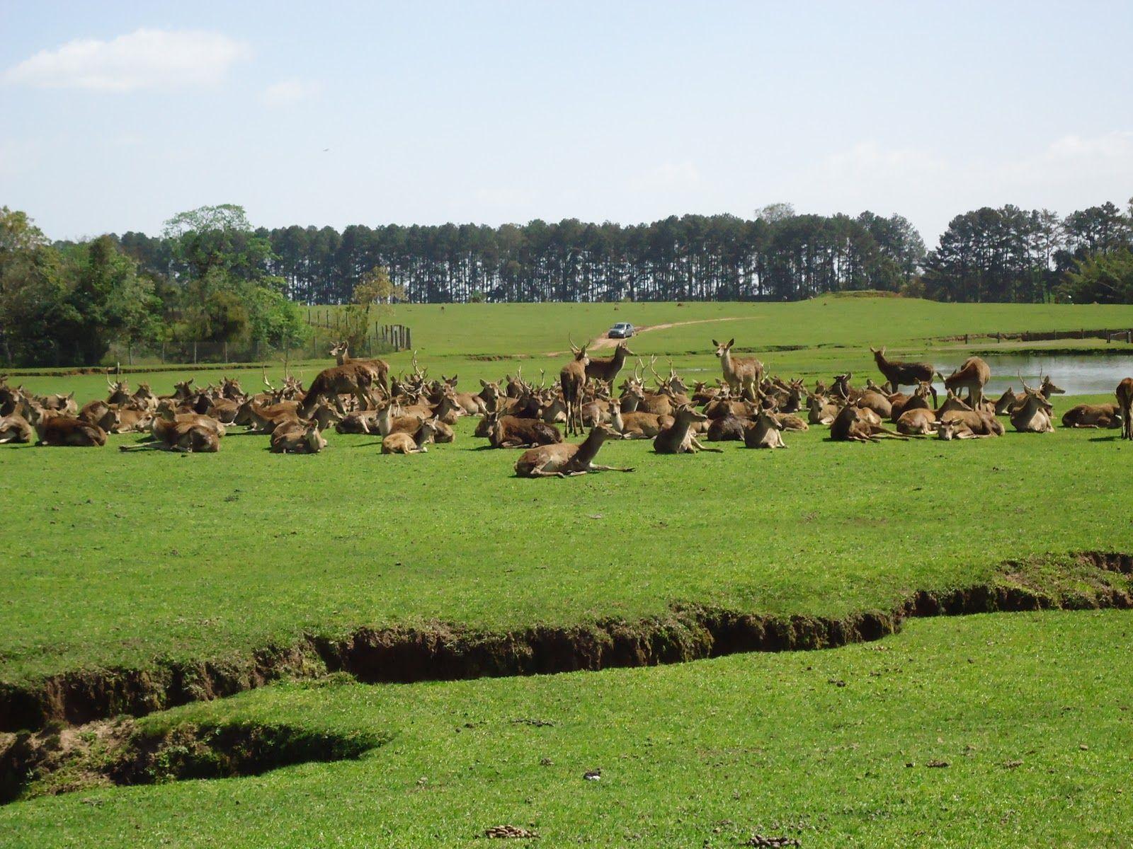 Situação dos cervos do Pampa Safari segue em processo