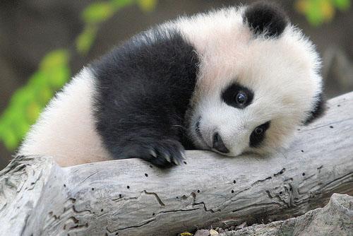 Bebês animais: doses altas de fofura