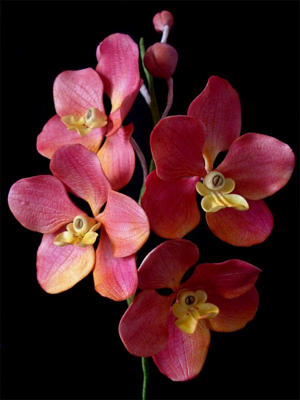 Veja o passo a passo para reproduzir orquídeas de açúcar