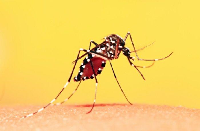 Em 2017, 27 pessoas foram infectadas com febre amarela silvestre no estado do Rio / (Foto: Reprodução)