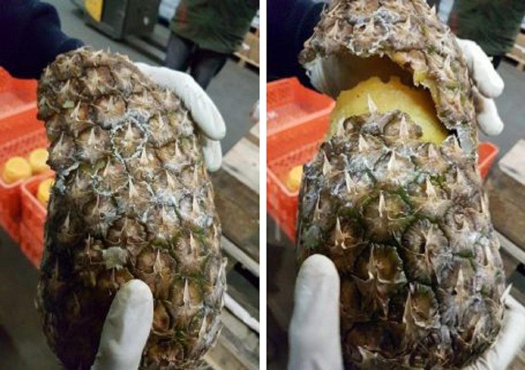 Portugal e Espanha apreendem 745 kg de cocaína escondidos em abacaxis