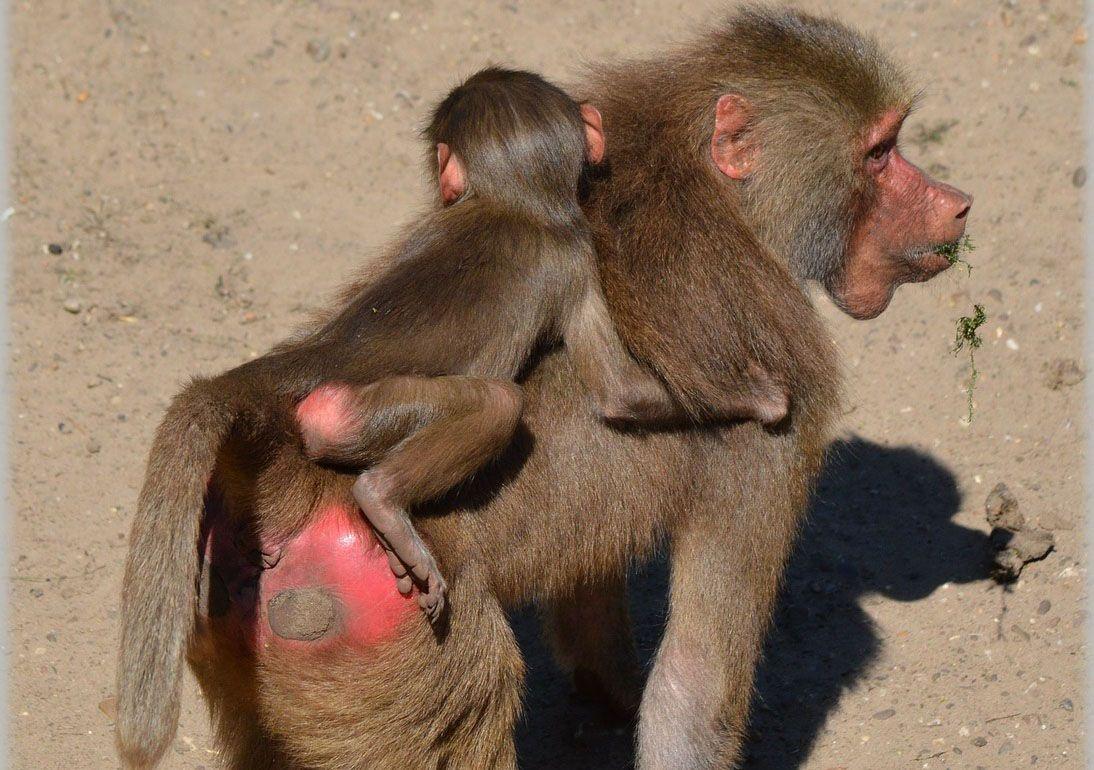 Policial ambiental se demite após fotos de animais caçados na África