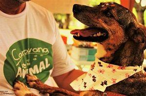 Caravana animal promove doação cães e gatos em Taubaté