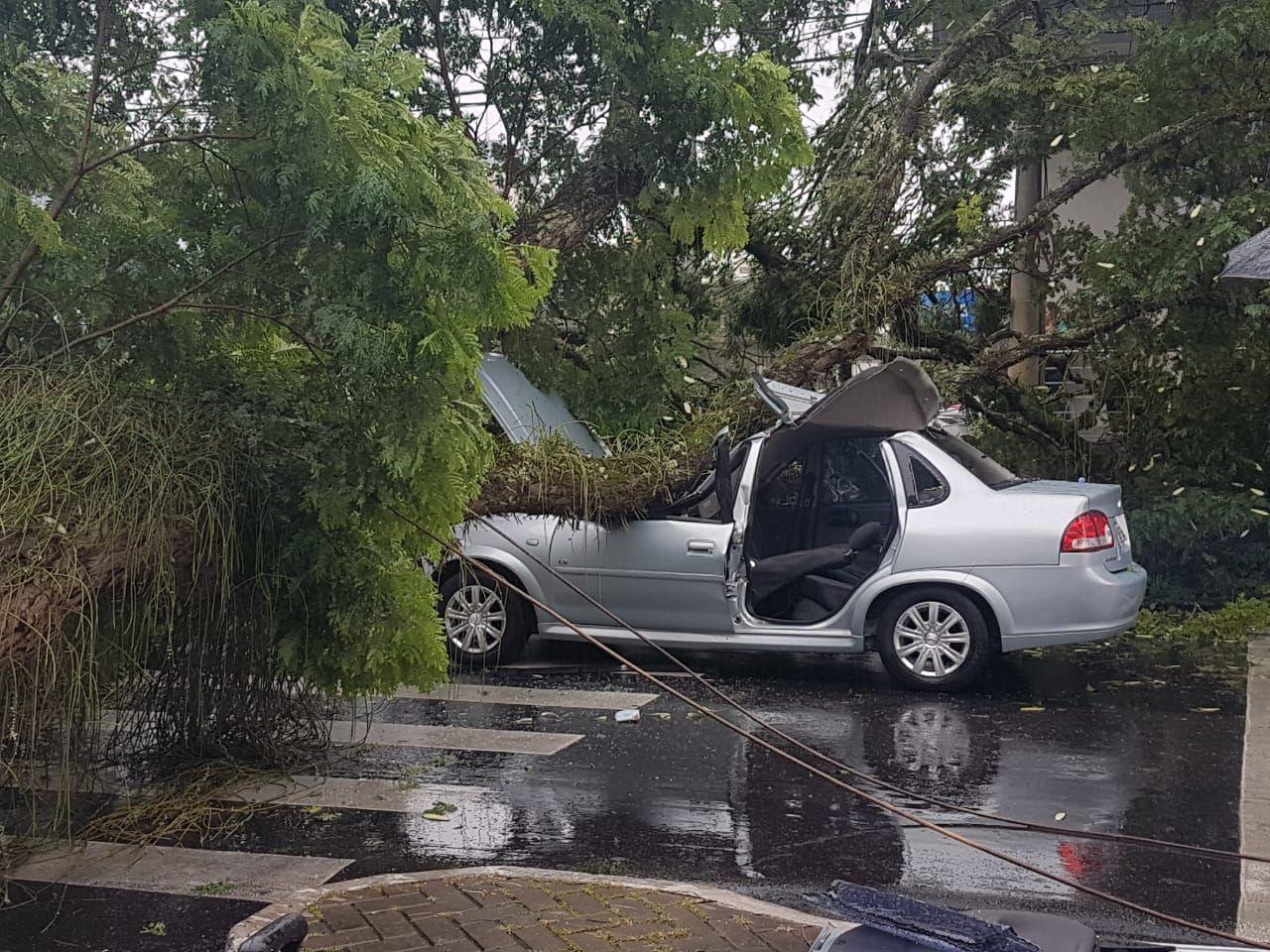 Árvore cai e deixa ferido em São José dos Campos