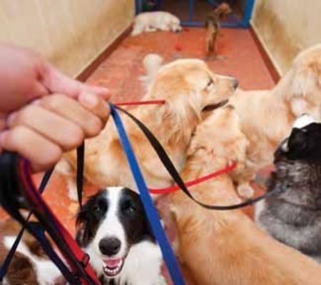Passeio ideal deve contar com no máximo quatro cães