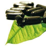 Estudo concluiu que a erva é eficaz como emagrecedor, mas ela ainda não é registrada pela Anvisa  / Foto: Divulgação