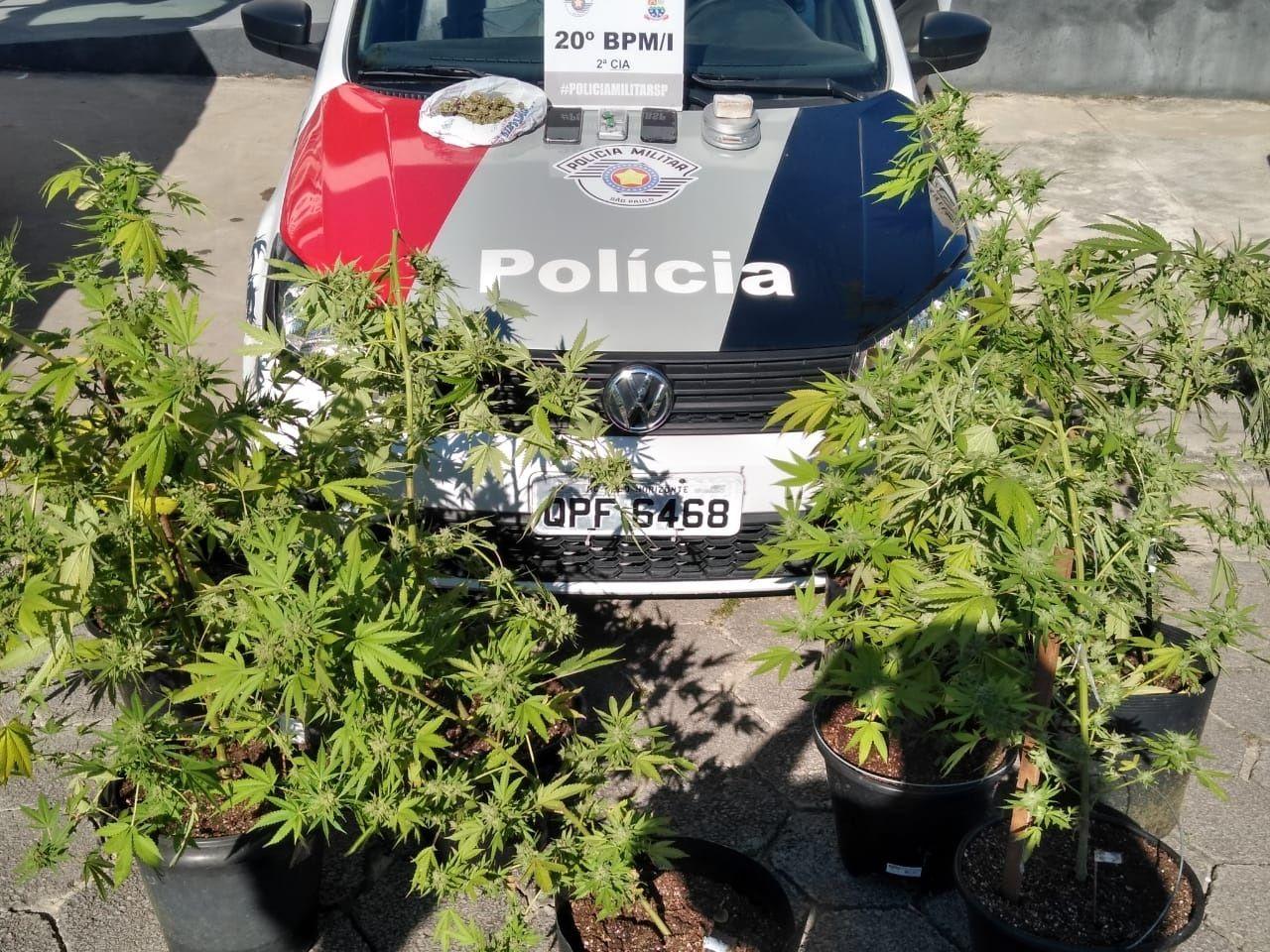 Plantação de Maconha é flagrada pela Polícia Militar em Caraguatatuba