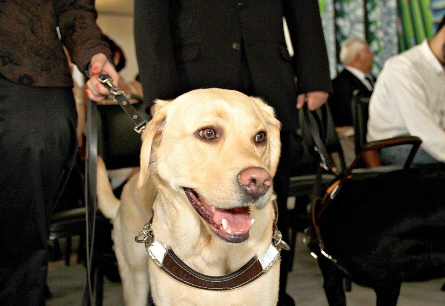 Após o treinamento, os cães serão encaminhados às pessoas com deficiência visual gratuitamente