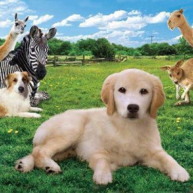Os cachorros atores!