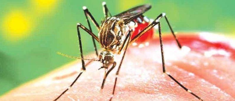 Quarto caso de morte por Dengue é confirmado em São José dos Campos