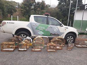 Dezoito aves são resgatadas pela Polícia Ambiental em Guará