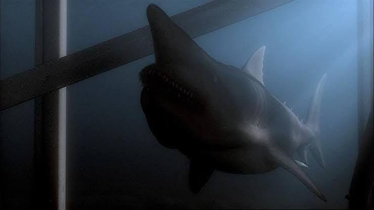 Após o tsunami... vêm os tubarões!