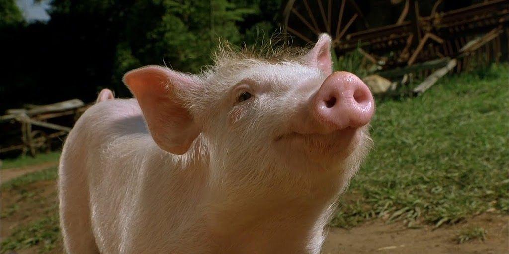 O porquinho mais famoso do cinema