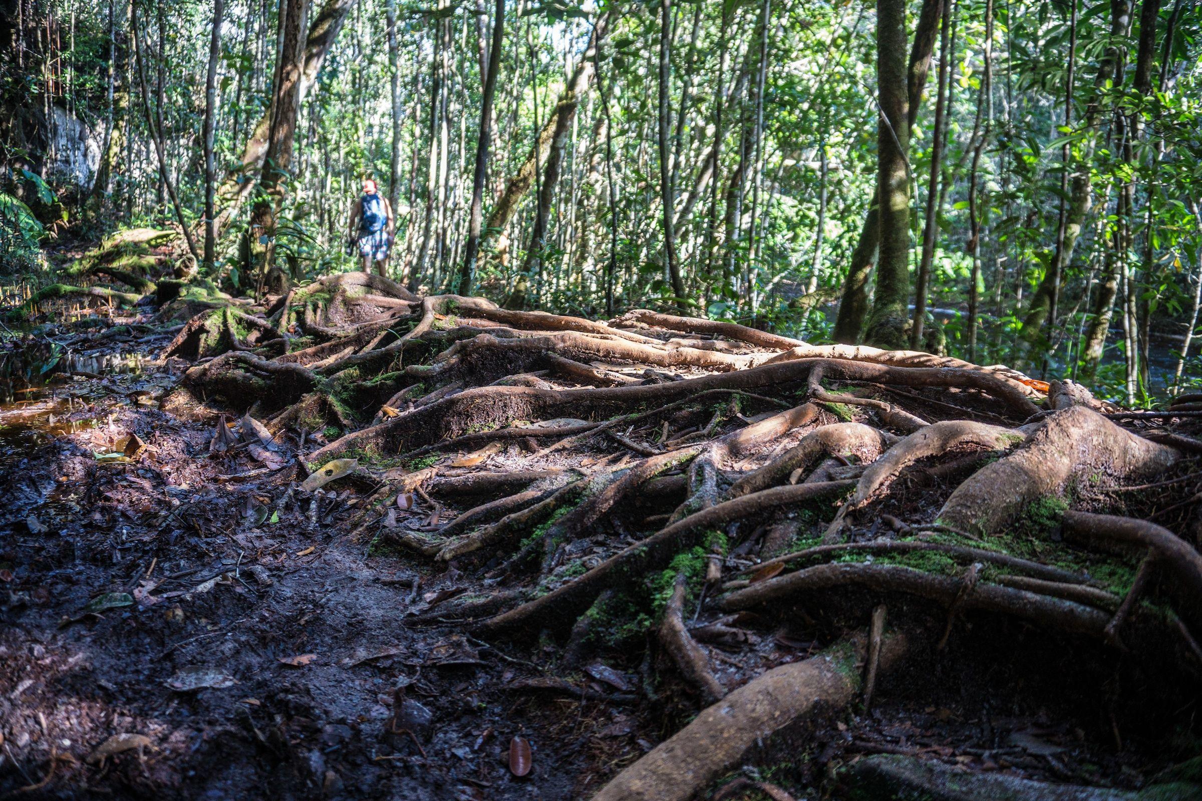 Quanto ainda existe de vegetação nativa no Bioma Amazônia?