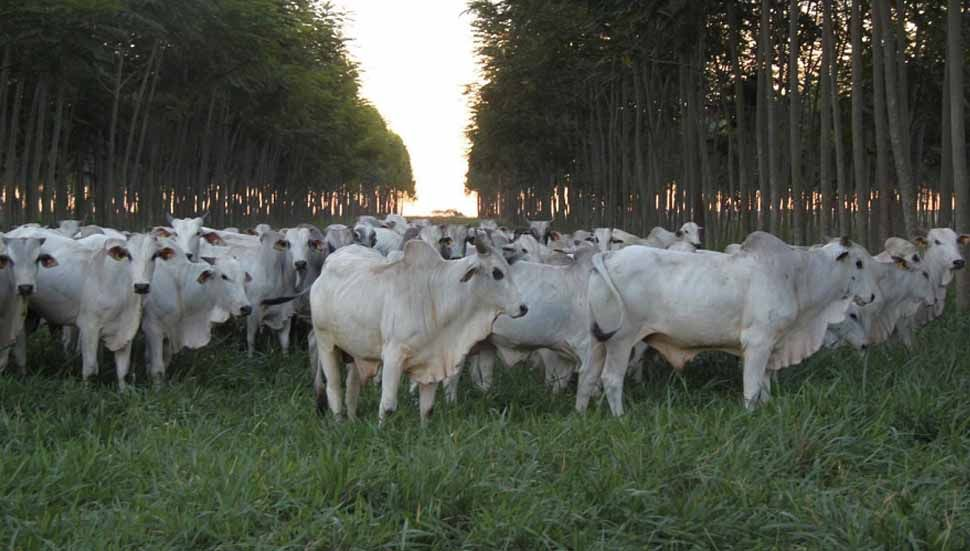 Amazônia tem mais de um milhão de agricultores