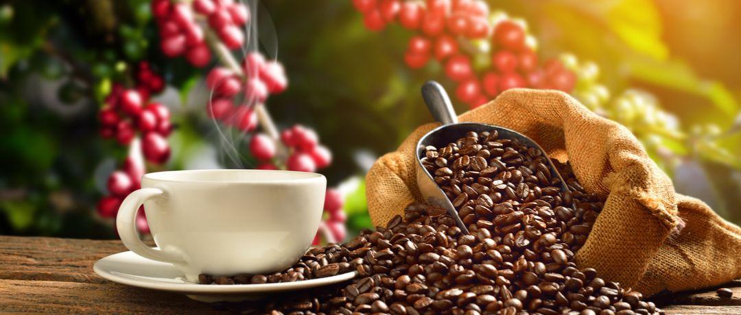 Café produzido no Brasil. / Divulgação