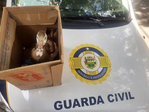 Homem tenta furtar pato do Horto Municipal em Taubaté