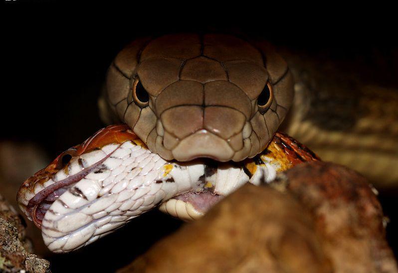 Episódio da semana foca nas cobras / Divulgação