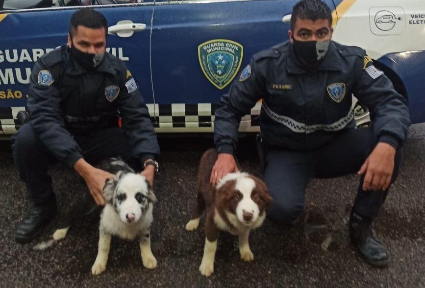 Homem é detido após abandonar cães em São José dos Campos