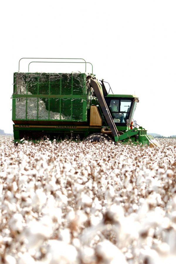 Foto da Abrapa mostra plantação de algodão / Foto: Divulgação/Abrapa