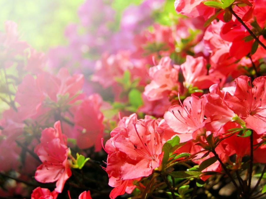 Mercado de flores se anima com a retomada de eventos presenciais e espera bons resultados