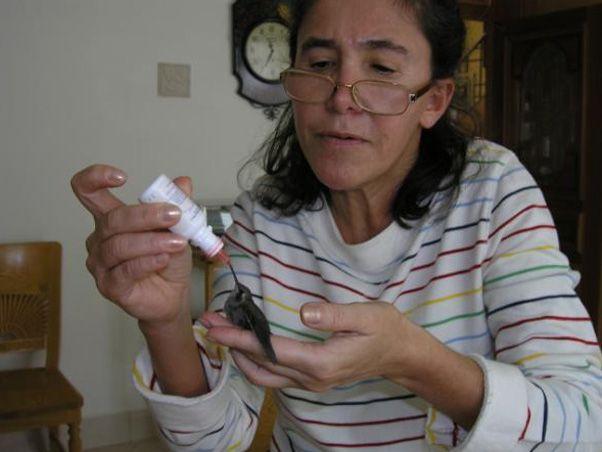 Florinda Meza alimenta o passarinho / Reprodução/Twitter