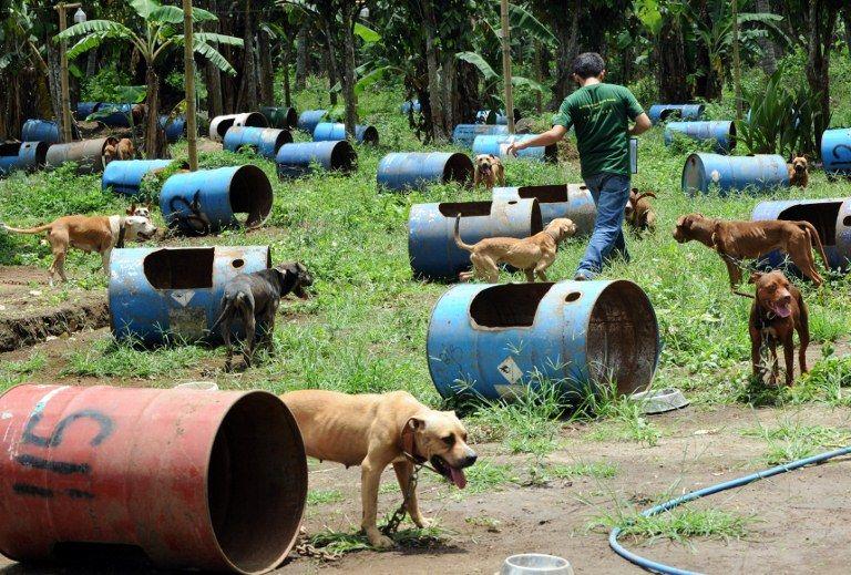 Animais eram mantidos em galões de metal em uma plantação na cidade de San Pablo / Ted Aljibe / AFP