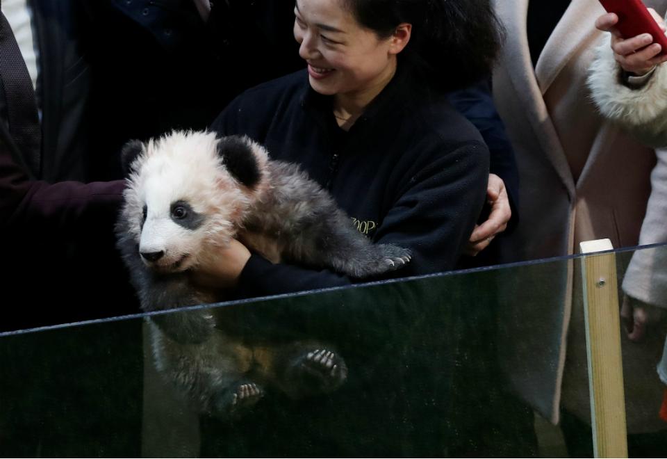 Emprestar pandas para aliados faz parte da geopolítica da China