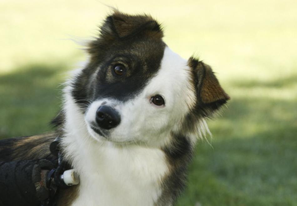 Marie, a cadela que inspirou a criação de uma ONG