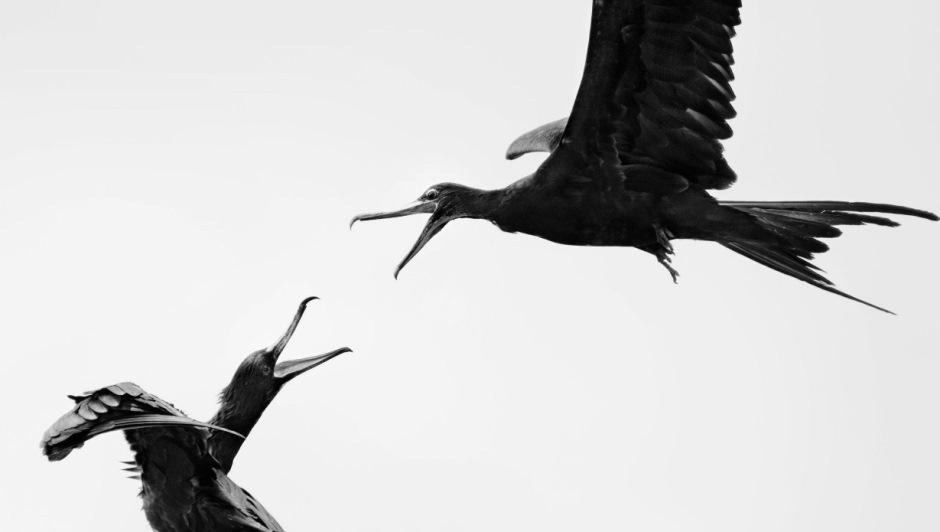 Fotógrafos registram imagens incríveis de pássaros
