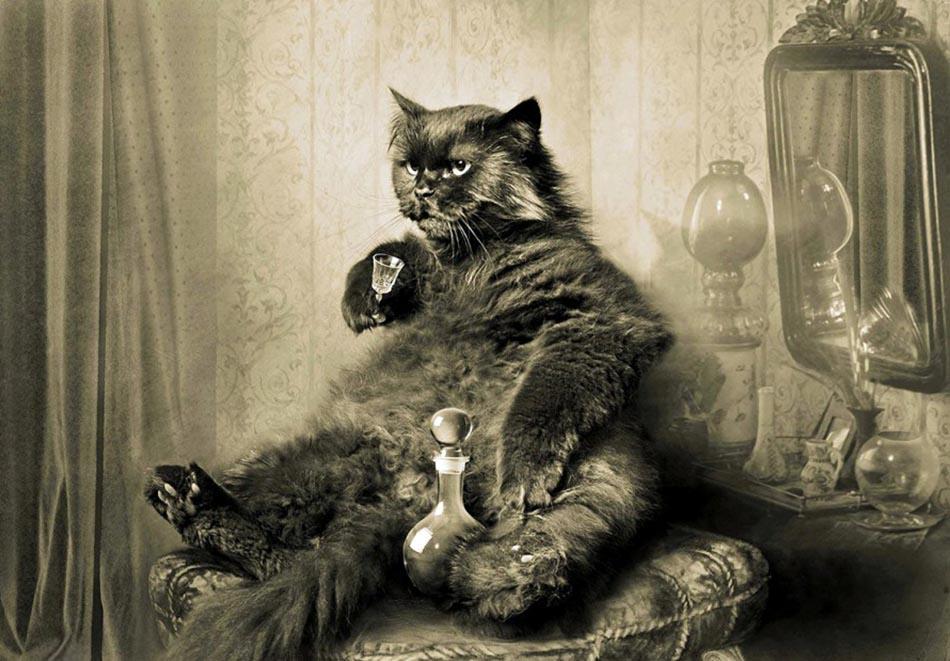 Gatos que marcaram história na Rússia