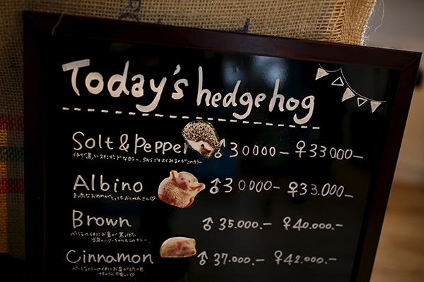 Café no Japão tem porcos-espinhos como atração