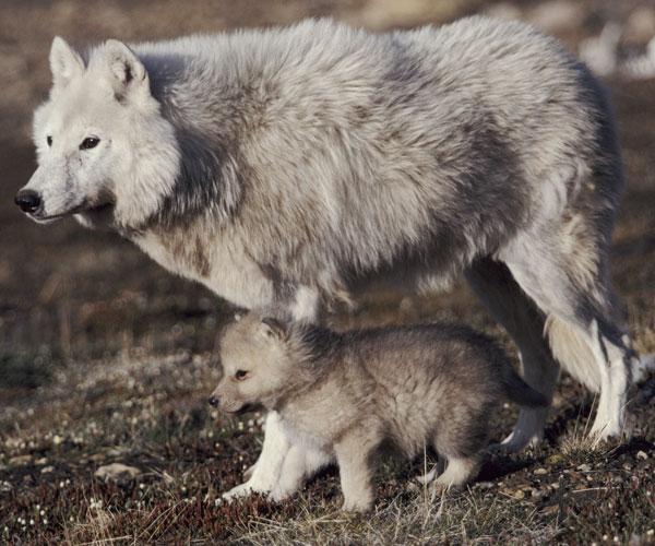 A hereditariedade e o instinto
