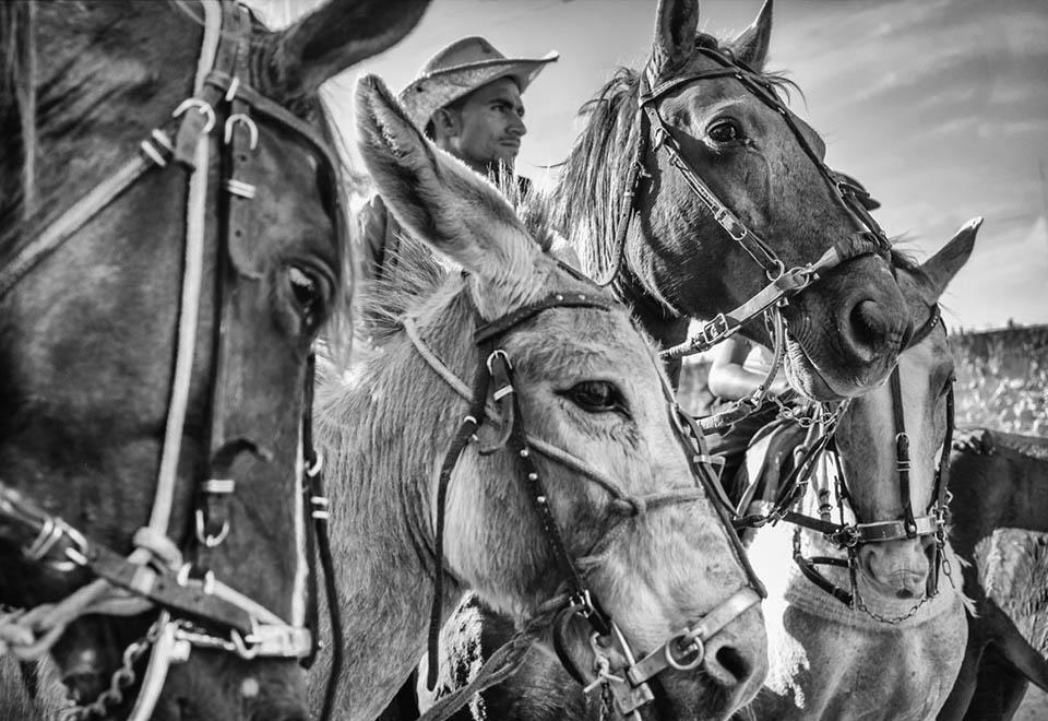 Livro de fotografia retrata o agreste brasileiro