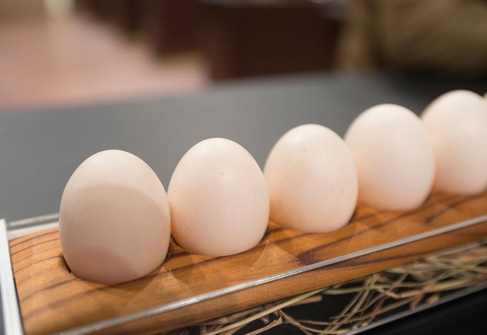 Prova de eliminação requer 4 rounds e muitos ovos
