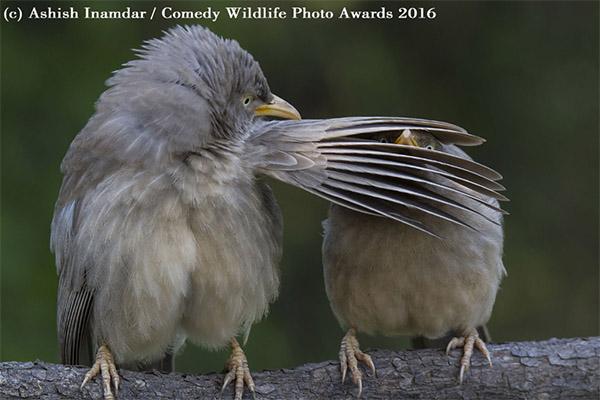 Concurso premia fotos mais engraçadas de animais
