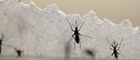 zika mosquitos 140x60.jpg